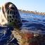 zeeschildpad in Marsa Alam
