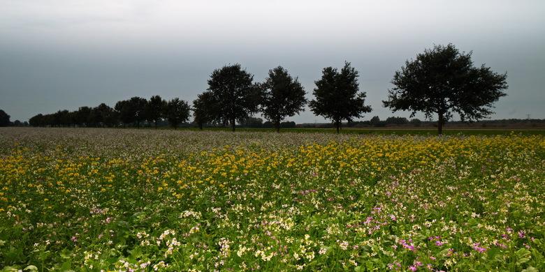Groenbemesting - Groenbemestingsplanten zijn de bloembollen van de herfst.