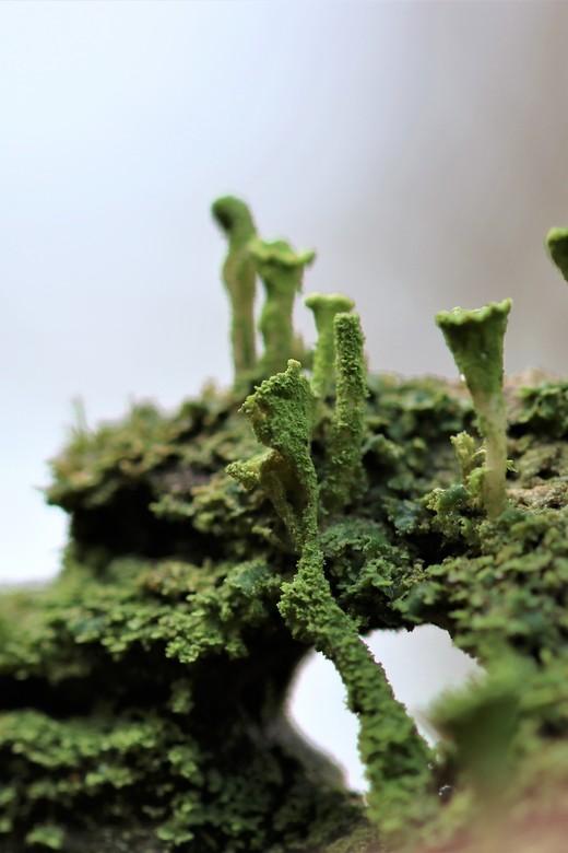 mosjes - mos op een boomstronk<br /> 12-11-2019