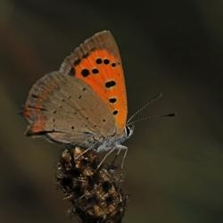 2018-08-11_4948--vlinder-vu