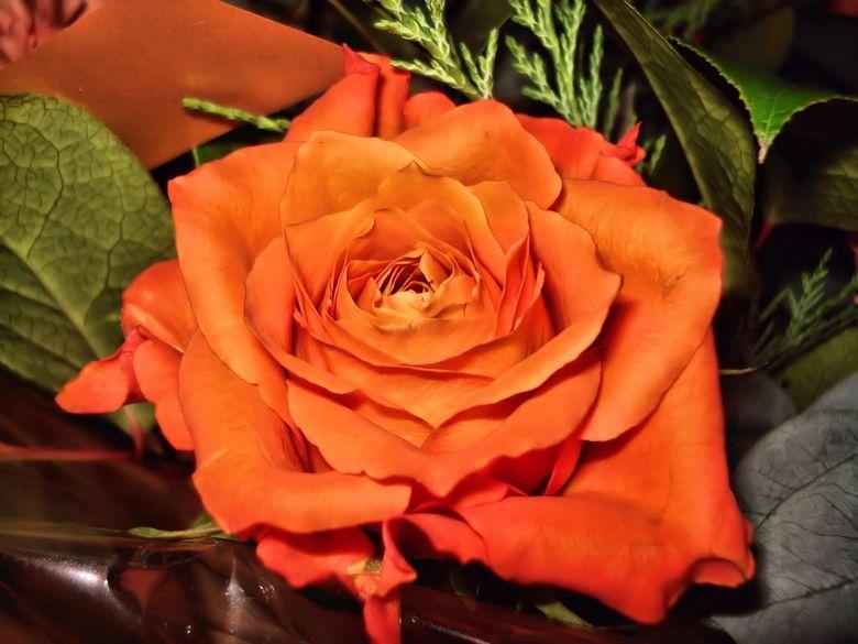 Roos - EEn roos uit een boeket.