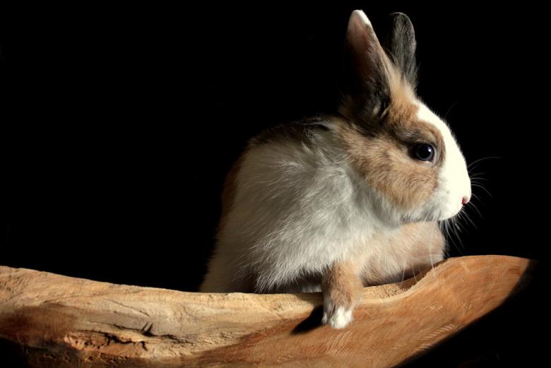 konijn - konijn