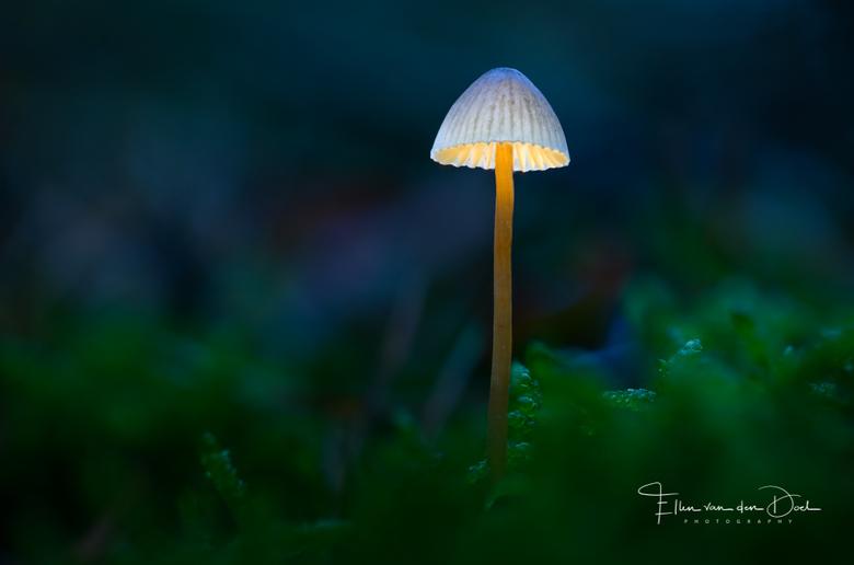 Little Home - Dit keer wilde ik mezelf eens uitdagen met het fotograferen van een paddenstoel in combinatie met het gebruik maken van lightpainting. L