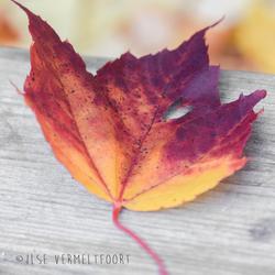 Herfstblad met hartje