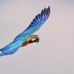 Flying Beauty!