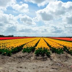 Texel bekent kleur