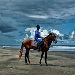 Gambian Horse.