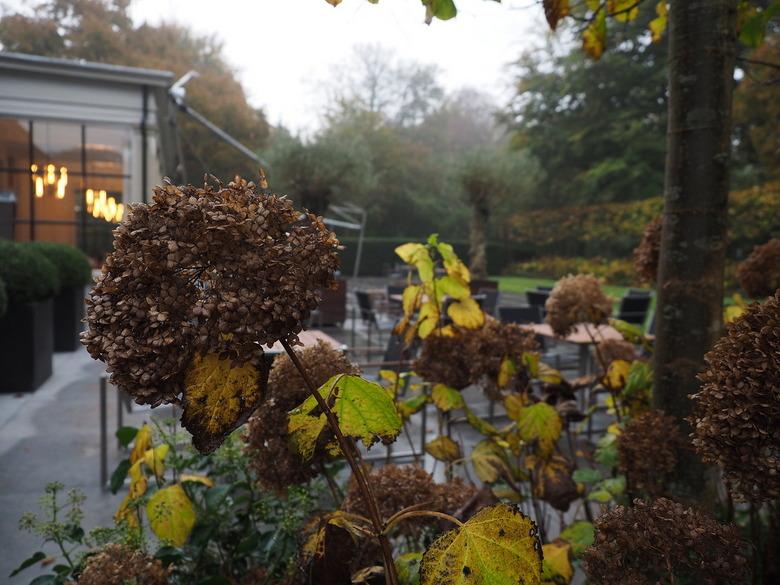 VANMORGEN... - De Herfst...het raakt over....terrassen leeg van Restaurant Groenendaal...<br /> De Pluimhortensia,s geven nog dikke bollen...