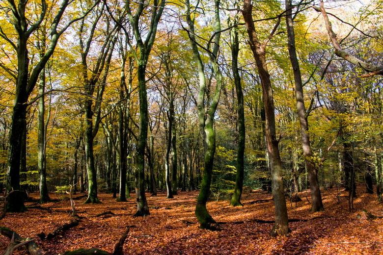 Speulderbos -1- - Het dansende bomen bos