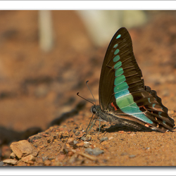Neon Vlinder