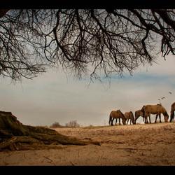 Habitat of the horse