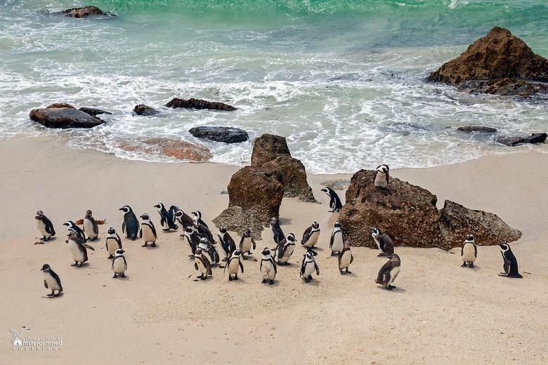 Boulders beach in Zuid Afrika