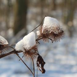Droge klit in winterjas