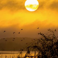 Sunrise @ Lac du Der