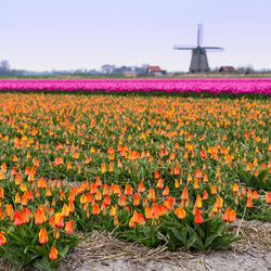 Hollandse lente
