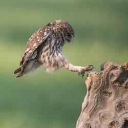 Steenuiltje landing