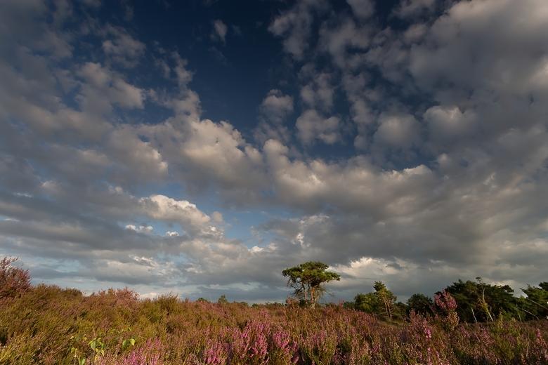 Colours off Nature -
