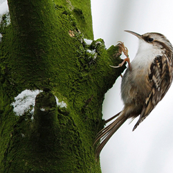 High Speed Bird
