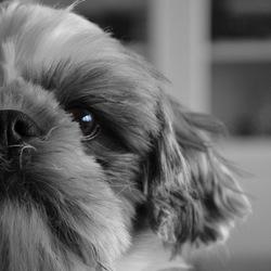 Hond zwart/wit
