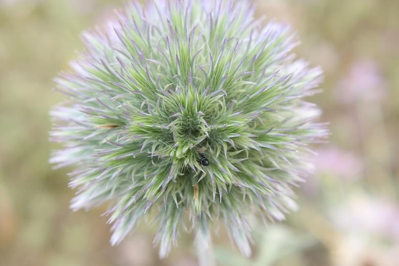 De 3 fasen in de natuur (2) - Fase 2;<br /> Tijdens de bloei van de plant / onkruid<br />