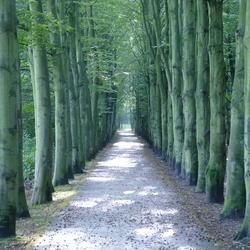 Mooie bomenrij in Uithof