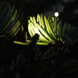 Lichtje