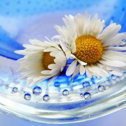 Bloemetjes en bubbels