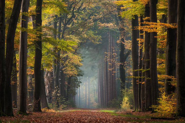 Autumn Color Explosion -