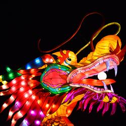 Kleurrijk China Light Draak