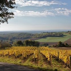 herfst in wijngaard
