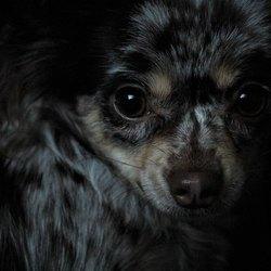 Portret Misty