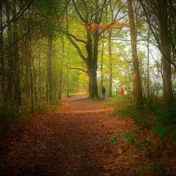 Herfst in de Ulvenhoutse bossen(1)