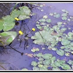 Stil waterlandschap
