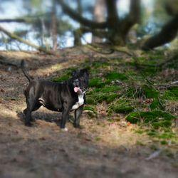 @Drunense Duinen met mijn hond