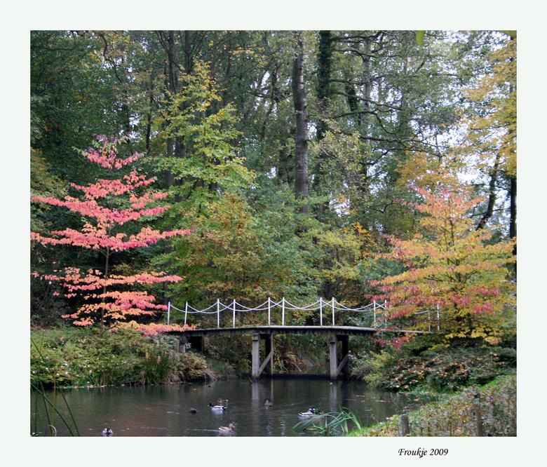 herfstkleurtjes  - Bedankt voor de reacties op mijn vorige foto .<br /> Groetjes Froukje