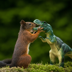 Squirrel Vs T-Rex