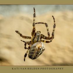 Garen spinnen