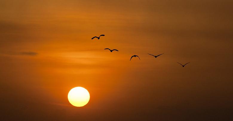 Naar de zon