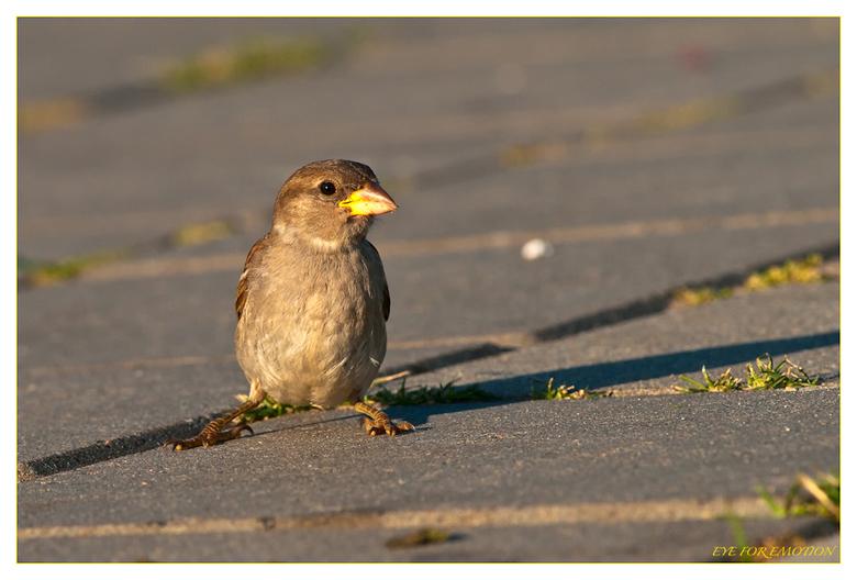 Model - Vogels hebben altijd de grootste lol als ik de camera op ze richt...ze lachen zich echt rot want ze weten heel goed dat ik ze er toch niet sch