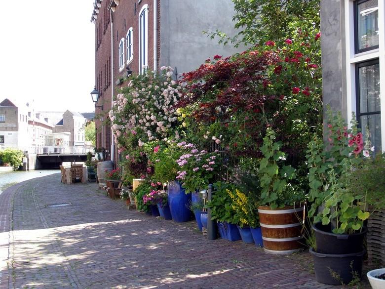 BLOEMEN AAN DE SCHIE IN SCHIEDAM - Bloemen en planten tegen aan muur en hek aan de Schie in Schiedam.