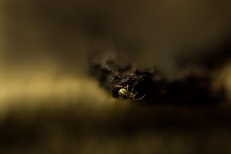 and again - begin nu toch te denken dat spinnen zich hier erg thuis voelen behalve de nu spoorloze springspin vond ik deze kleine kriebelaar in een ve