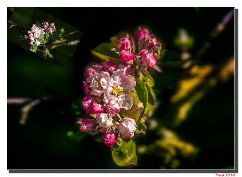 lentebloesem - Een beetje lentebloesem zo diep in de zomer kan toch nog wel.
