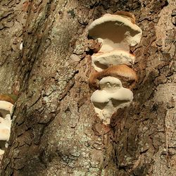 0282 Boom paddenstoelen.