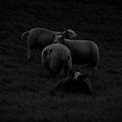 Nachtfotografie schapen