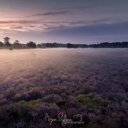 de Heide bedekt onder een dikke laag mist