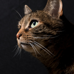 Deze keer mochten de katten model staan