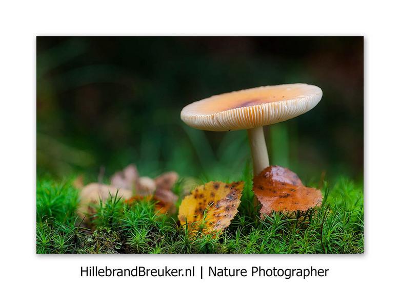 Vooruitkijken... - Ik hou van de seizoenen in Nederland. Heerlijk die afwisseling. Ook de herfst met haar fraaie licht, mooie kleuren, prachtige padde