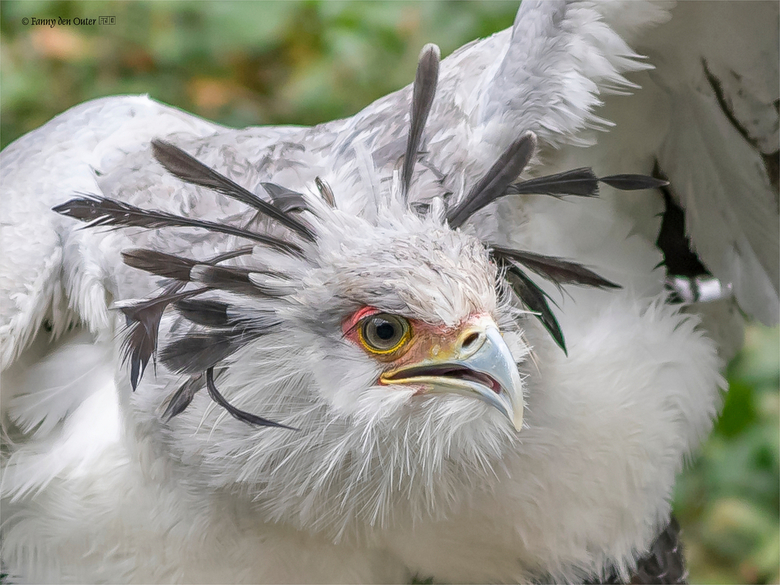 One Angry Big Bird - One Angry Big Bird
