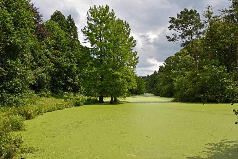 Kroos - Het Wandelbos in Tilburg<br /> Zo groen heb ik de vijver nog nooit gezien.. echt mooi is het niet maar ik vind het toch leuk om even te laten