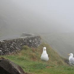 Meeuwen in de mist